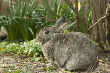 rabbit-717855_1920