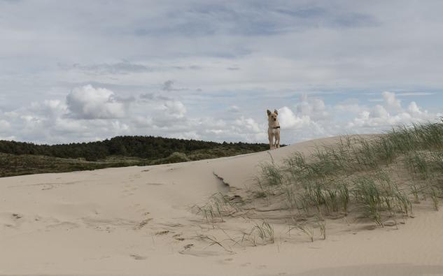 dune-842453_1280