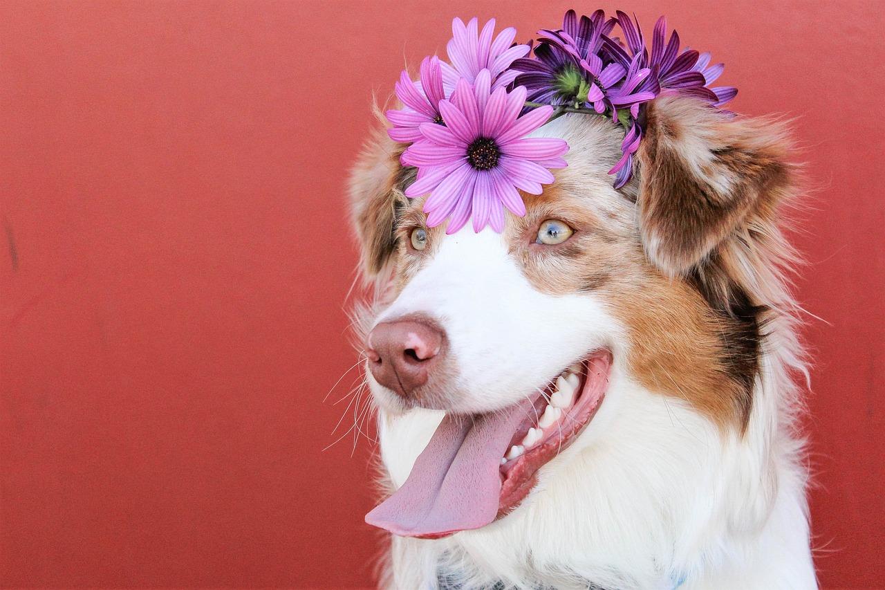 6 Dinge, die Hundehalter im Frühling beachten sollten