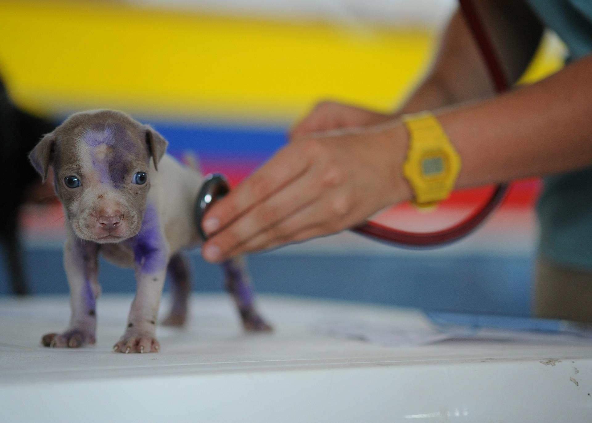Einen guten Tierarzt erkennen: 10 Tipps, die Euch bei der Suche helfen