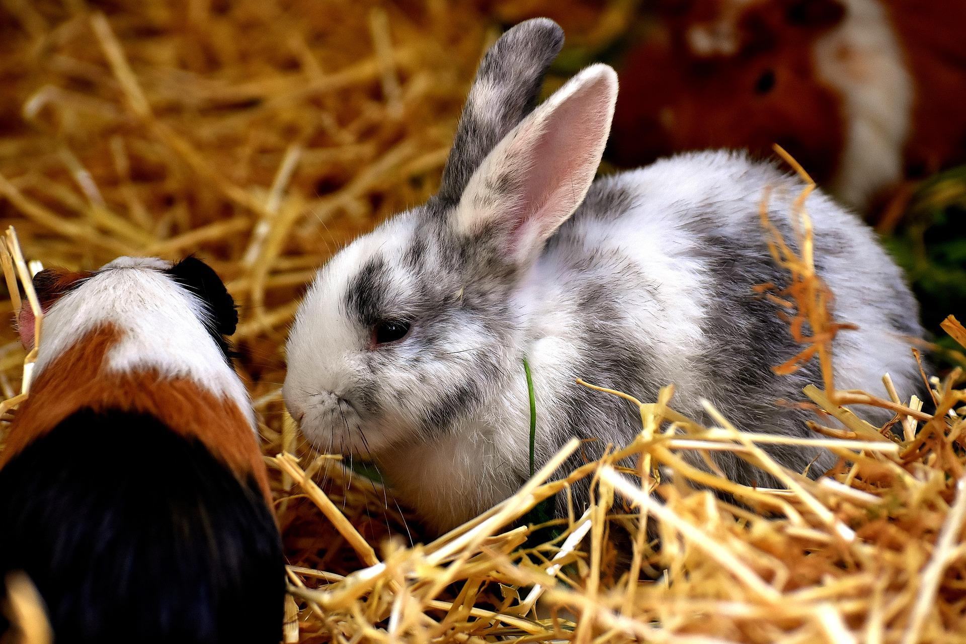 Die 7 häufigsten Ursachen von Durchfall bei Kaninchen