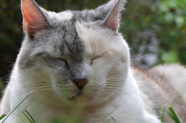 cat-1729674_1920