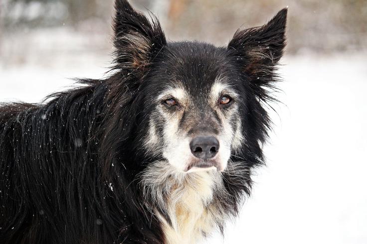 Hat mein Hund Alzheimer?