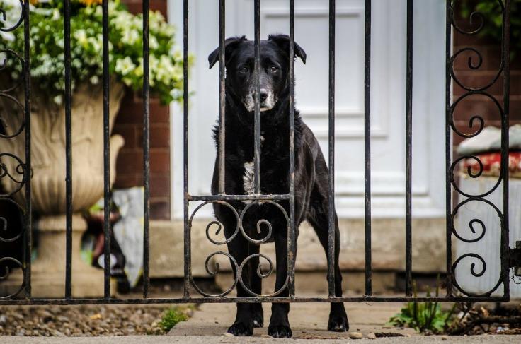 dog-219892_1280