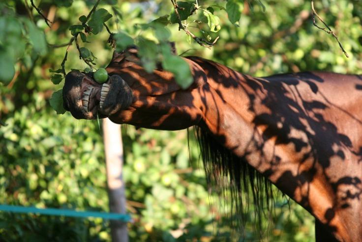 Ernährung Pferd Magenulzera