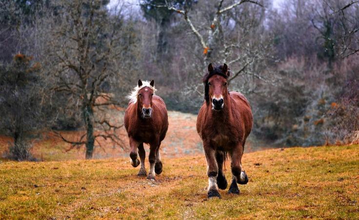 Bewegung Pferde