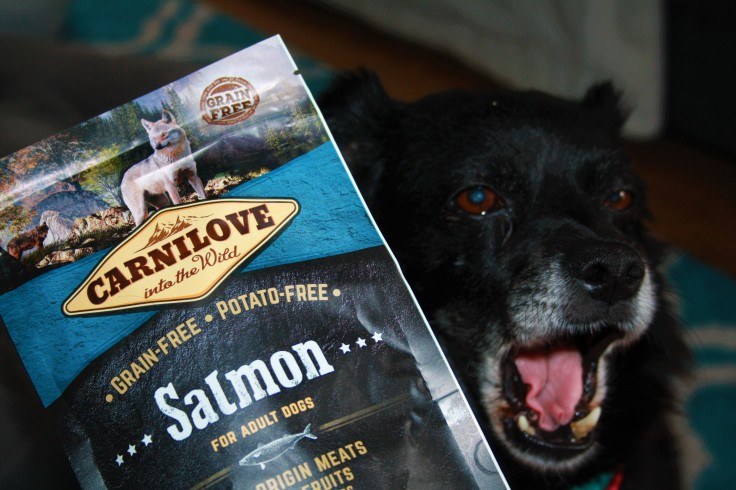 Carnilove Salmon Test
