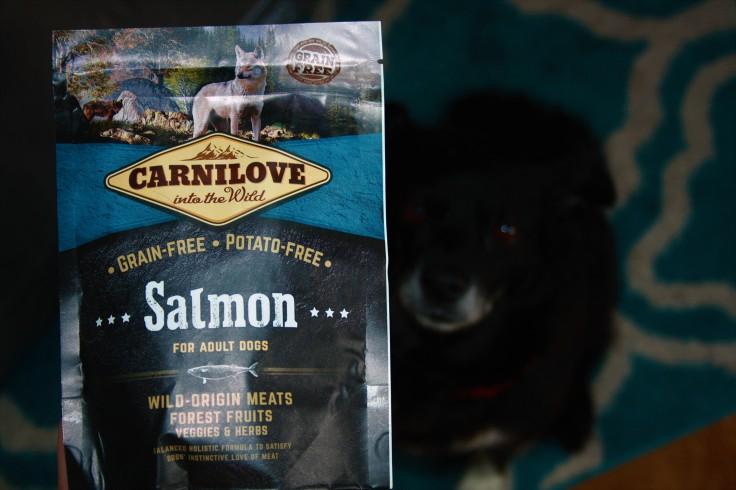 Carnilove Trockenfutter Salmon adult dogs