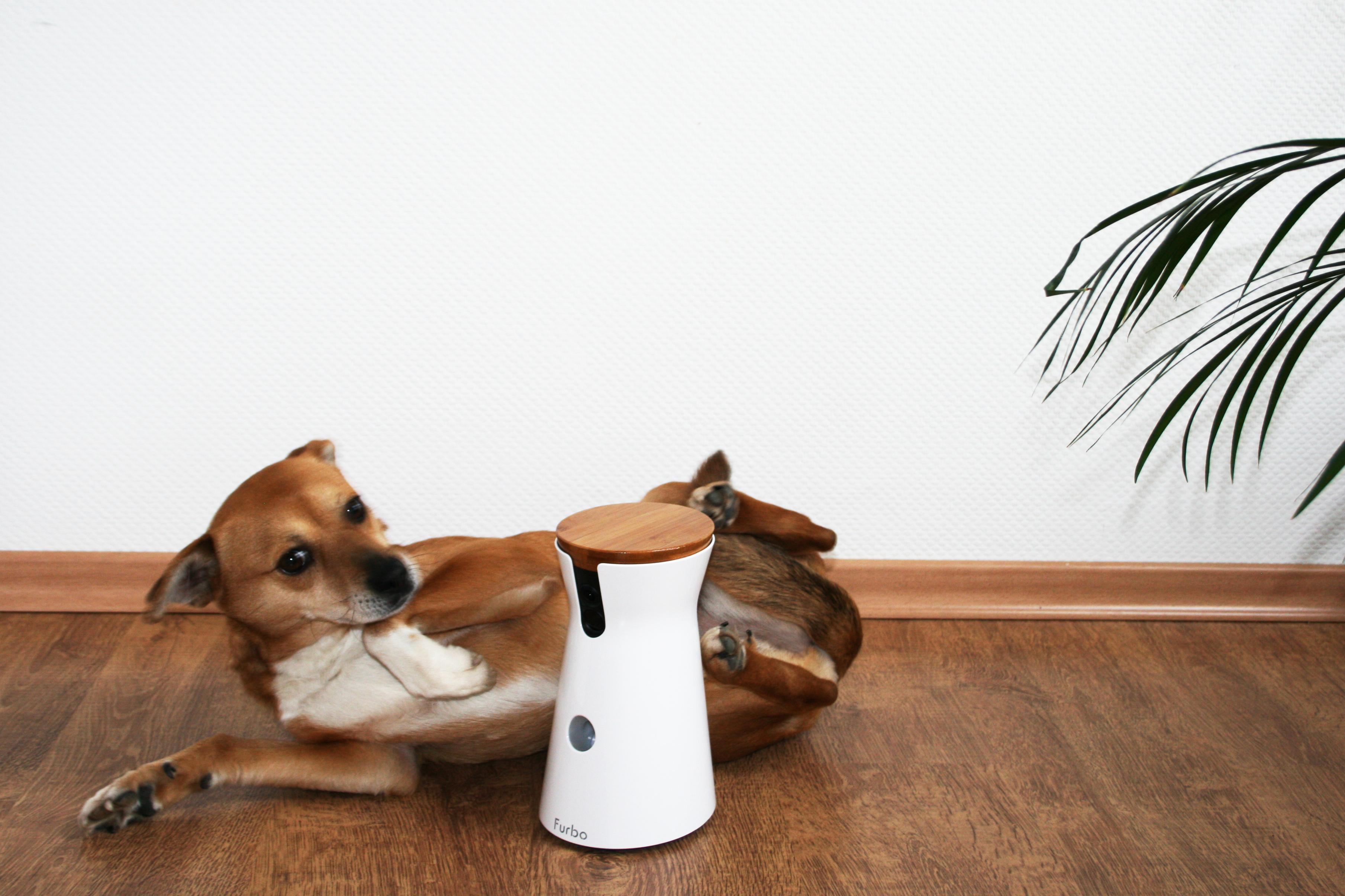 [Anzeige] Wir testen: Die innovative Furbo Hundekamera!